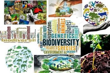 """Eco-cops"" - the Environmental Club of Uttaranchal University celebrates ""World Environment Day"""
